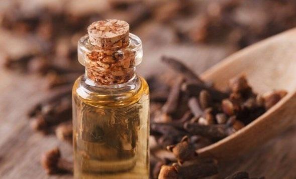 Dầu đinh hương hoặc dầu quế chữa sưng lợi.