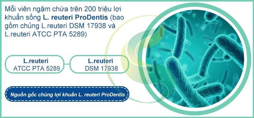 Thành phần viên ngậm men vi sinh nha khoa Biogaia Prodentis